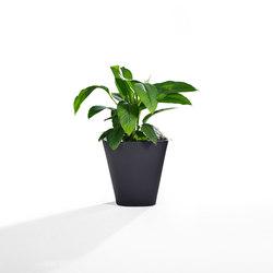 Kono | Pots de fleurs | Derlot Editions
