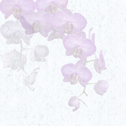 Orchidales | Quadri / Murales | TECNOGRAFICA