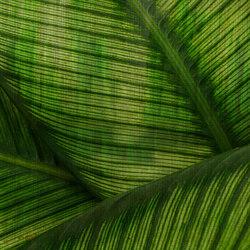 Paysage Leaf | Sur mesure | GLAMORA