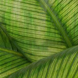 Paysage Leaf | Rivestimenti pareti | GLAMORA