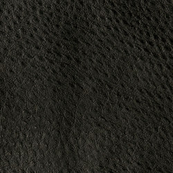 Fowl Play | Vireo | Kunstleder | Anzea Textiles