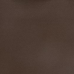 Silicon Slopes | Java | Fabrics | Anzea Textiles
