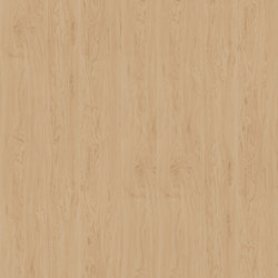 Birch Alaska | Wood panels | Pfleiderer