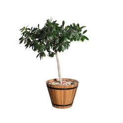 Sasi | Plant pots | MOYA