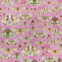 Jardin Des Plantes Wallpaper | Issoria - Rose | Wall coverings / wallpapers | Designers Guild