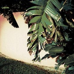 Tropicana | Carpet 3 | Tapis / Tapis de designers | schoenstaub