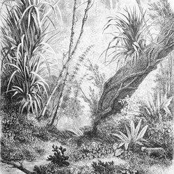 Foresta | Tejidos decorativos | Inkiostro Bianco