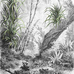 Foresta | Dekorstoffe | Inkiostro Bianco