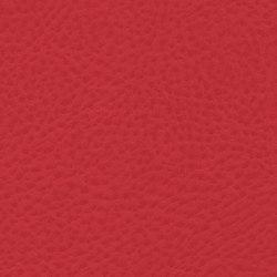Roadster | Top Speed | Tejidos tapicerías | Anzea Textiles