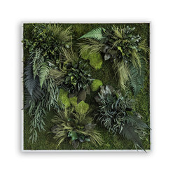 plant picture | plant islands 80x80cm | Décoration murale | styleGREEN