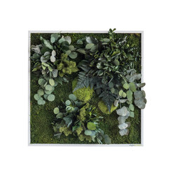 plant picture | plant islands 55x55cm | Living / Green walls | styleGREEN