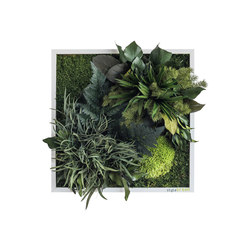 plant picture | plant islands 35x35cm | Living / Green walls | styleGREEN