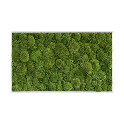moss picture | pole moss picture 100x60cm | Parades verdes / jardines verticales | styleGREEN