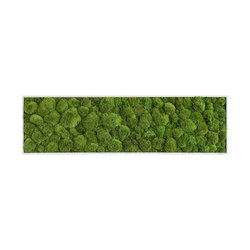 moss picture | pole moss picture 140x40cm | Living / Green walls | styleGREEN