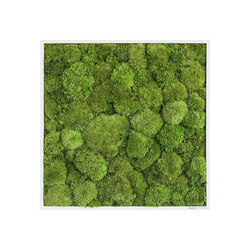 moss picture | pole moss picture 55x55cm | Living / Green walls | styleGREEN