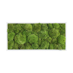 moss picture | pole moss picture 57x27cm | Wall decoration | styleGREEN