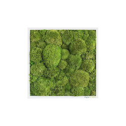 moss picture | pole moss picture 35x35cm | Wall decoration | styleGREEN
