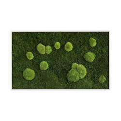 moss picture | pole and forest moss picture 100x60cm | Parades verdes / jardines verticales | styleGREEN