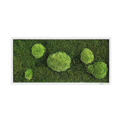 moss picture | pole and forest moss picture 57x27cm | Parades verdes / jardines verticales | styleGREEN