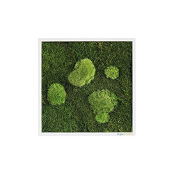 moss picture | pole and forest moss picture 35x35cm | Decoración de pared | styleGREEN