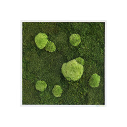 moss picture | pole and forest moss picture 55x55cm | Wall decoration | styleGREEN