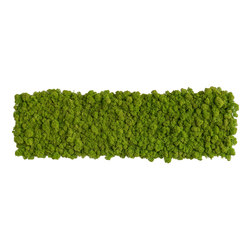 reindeer moss picture 70x20cm | Sound absorbing wall art | styleGREEN