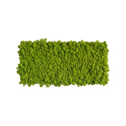 reindeer moss picture 57x27cm | Sound absorbing wall art | styleGREEN