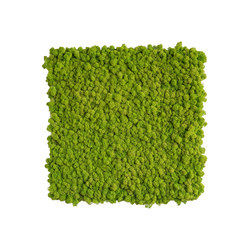 reindeer moss picture 55x55cm | Sound absorbing wall art | styleGREEN