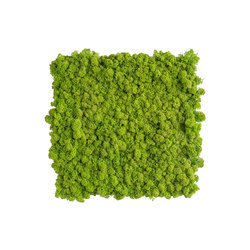 reindeer moss picture 35x35cm | Living / Green walls | styleGREEN