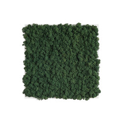 reindeer moss picture 35x35cm | Sound absorbing wall art | styleGREEN