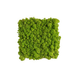 reindeer moss picture 22x22cm | Sound absorbing wall art | styleGREEN