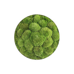 ellipsoid | pole moss 34cm | Wall decoration | styleGREEN