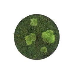 circle | forest and pole moss 34cm | Decoración de pared | styleGREEN