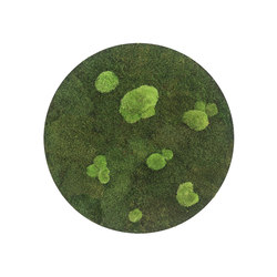 circle | forest and pole moss 54cm | Parades verdes / jardines verticales | styleGREEN