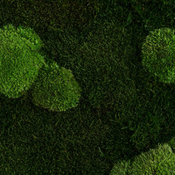 individual | greening forest and pole moss | Wall decoration | styleGREEN