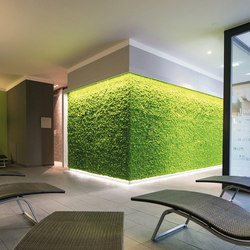 Evergreen Premium Moss | Pannelli per parete | Freund