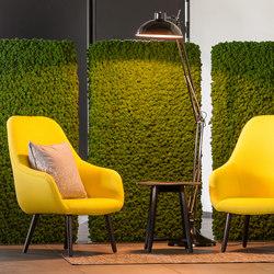 Evergreen Premium Moss   Privacy screen   Freund