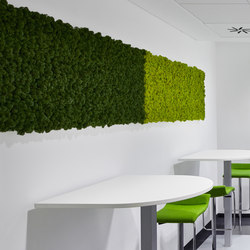 Evergreen Premium moss pictures | Cuadros de pared fonoabsorbentes | Freund