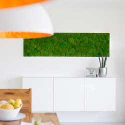 Greenhill Moss walls | Sound absorbing wall objects | Freund