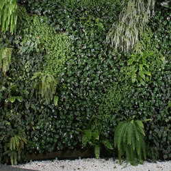 Live Panel vertical garden | Wall decoration | Freund