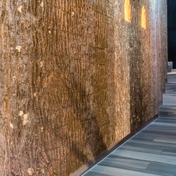 Poplar bark | Wood panels | Freund