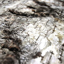 Birch bark | Planchas de madera | Freund