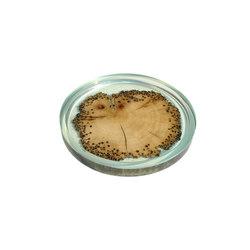 Bricola | Burano Plate | Vajilla | Alcarol