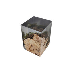 Undergrowth | Stump Stool | Hocker | Alcarol