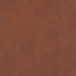 Expressions | Upholstery fabrics | CF Stinson