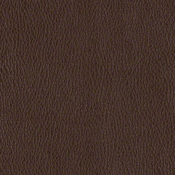 Camino | Upholstery fabrics | CF Stinson
