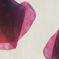petals | rossa | Wall coverings / wallpapers | N.O.W. Edizioni