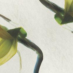 petals | narciso | Quadri / Murales | N.O.W. Edizioni