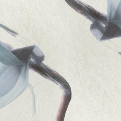 petals | narciso | Wall art / Murals | N.O.W. Edizioni