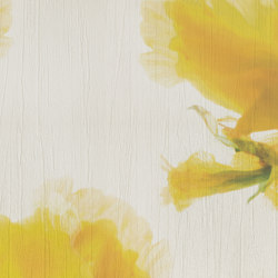 petals | giglio | Wall art / Murals | N.O.W. Edizioni